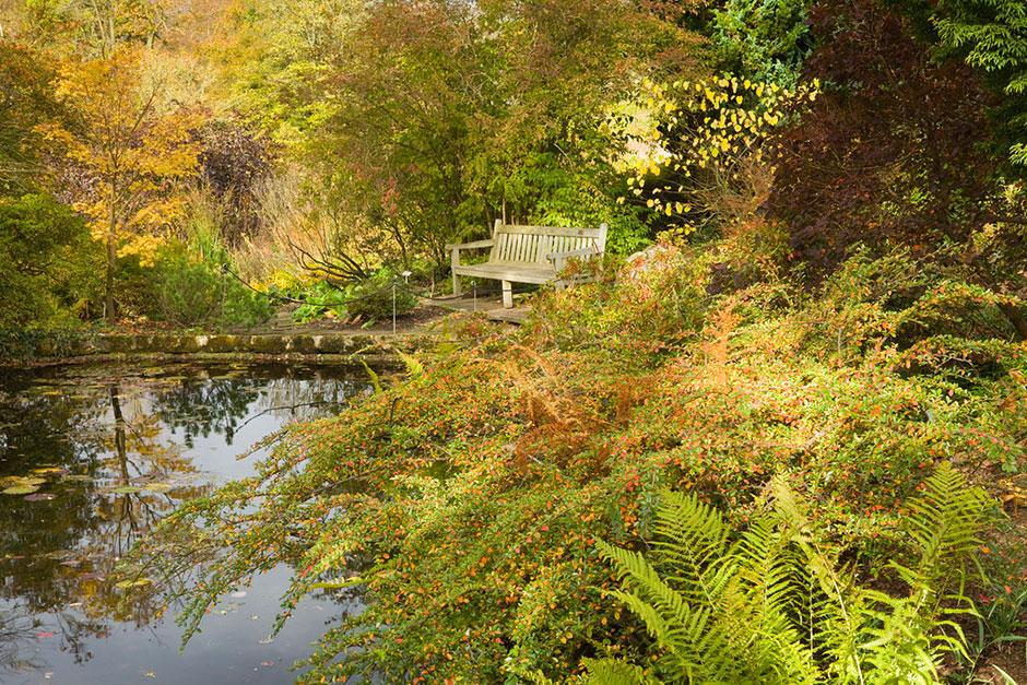 Autumn colour by the lily pond