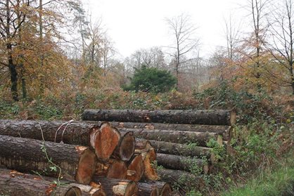 Cut timber waiting for collection