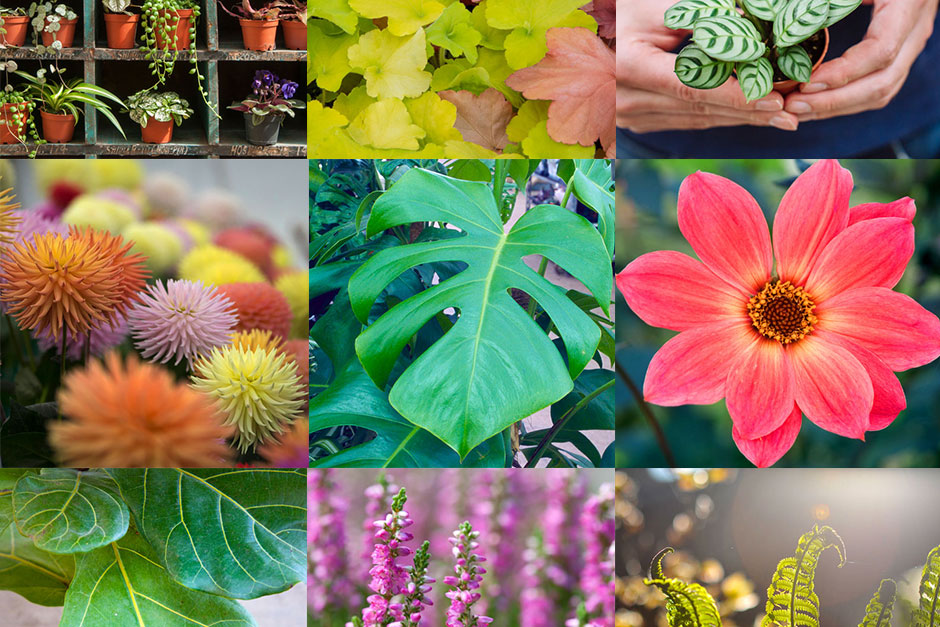 RHS predictions for plant trends 2019