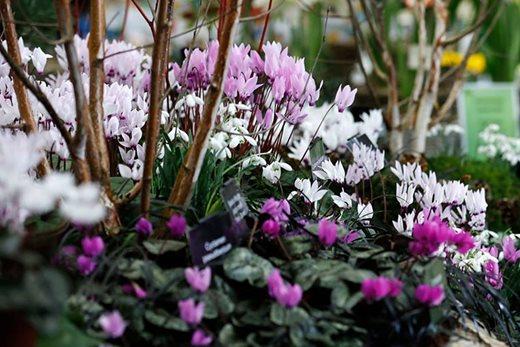 Rhs Early Spring Plant Fair Rhs Gardening