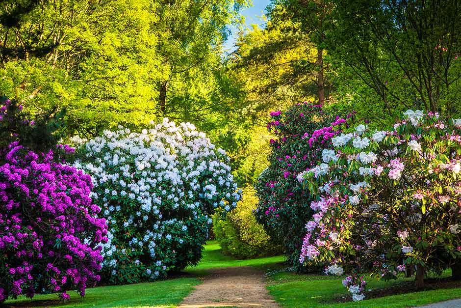 Good Bowood Woodland Gardens
