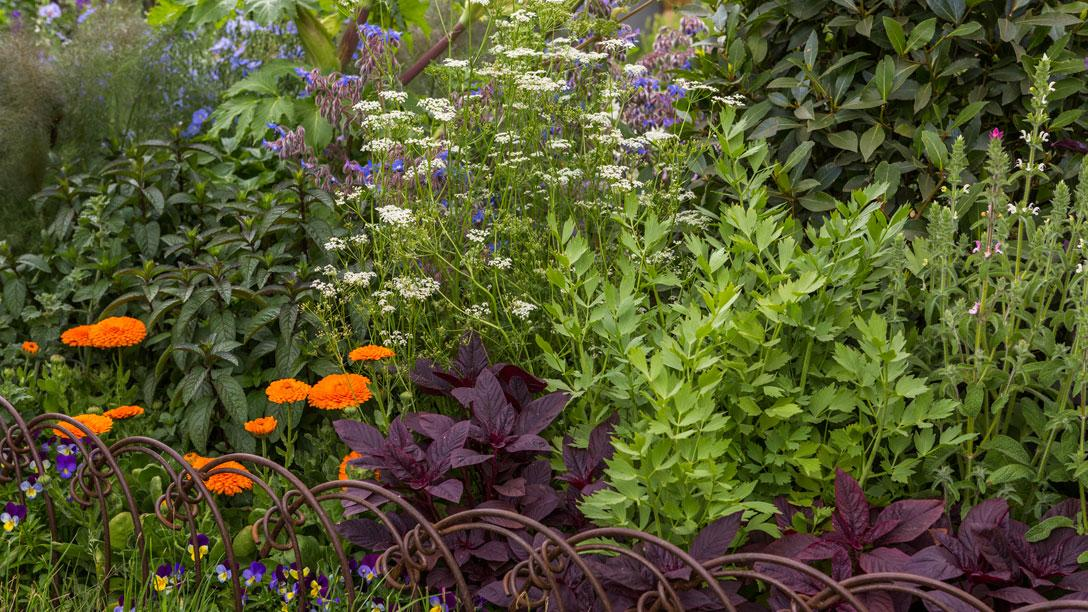 The garden features plants known to be beneficial to health and well-being