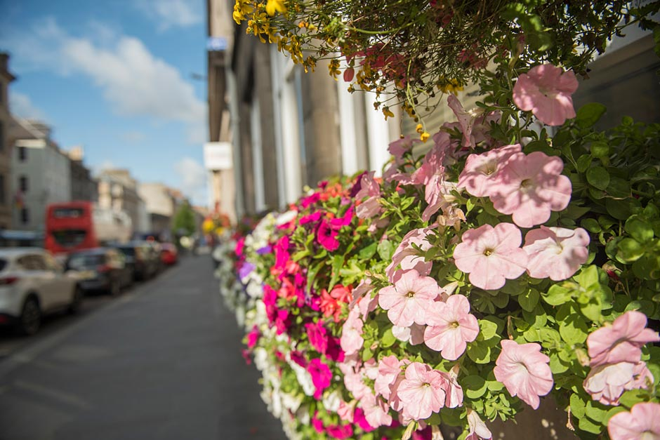 Perth in Bloom: Colourful flowers on the street