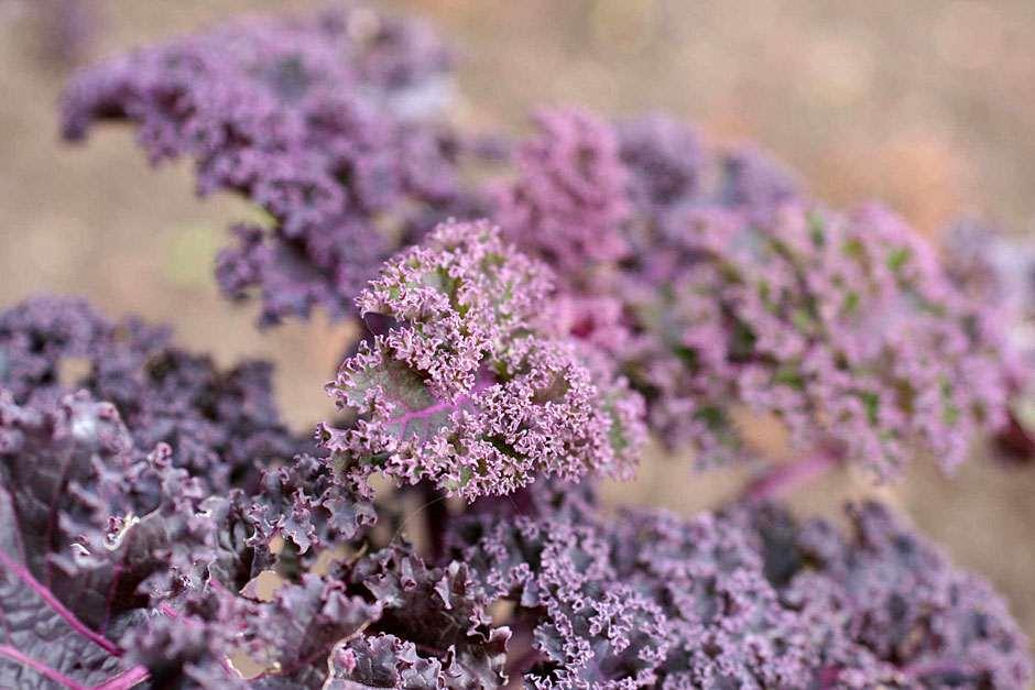 RHS Grow Your Own - Kale