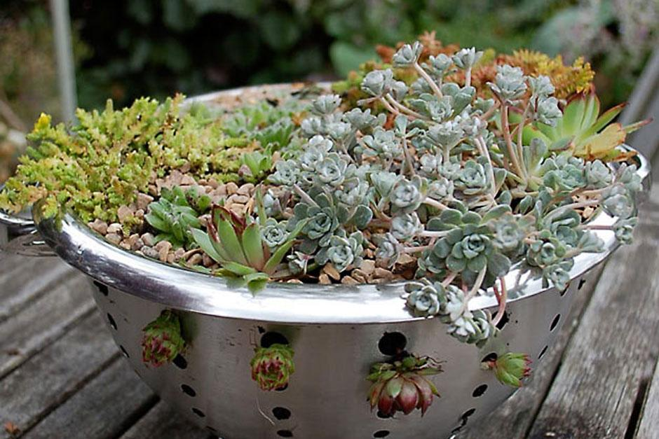 Make an alpine colander