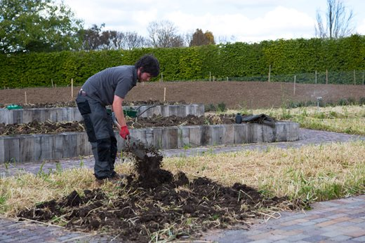 Digging in green manure