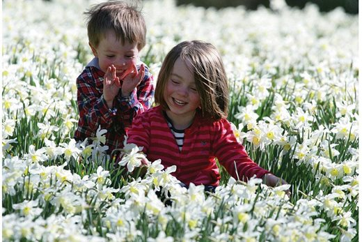 Children in a carpet of daffodils at Threave Garden