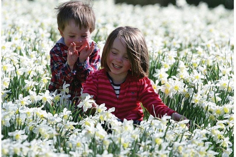 Children among daffodils, Threave Garden. Image Mike Bolam