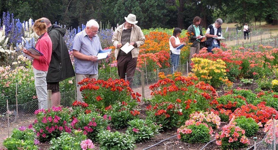Judges assessing plant trials