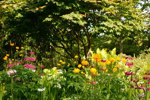 Colourful planting in May at Rosemoor