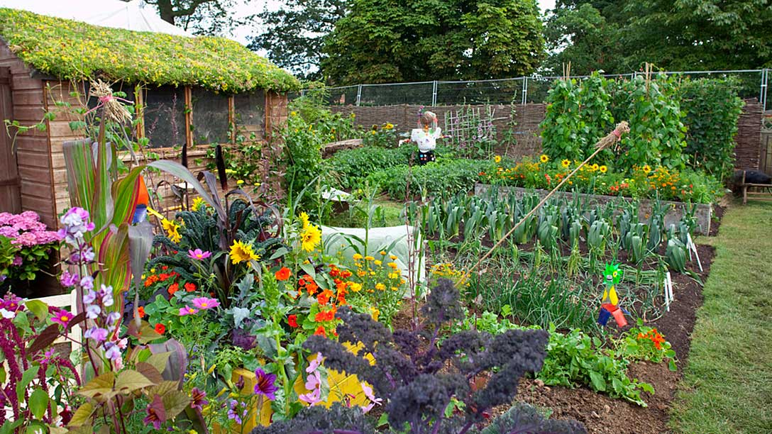 Growing your own gardening advice and tips from the rhs for Grow your own vegetable garden