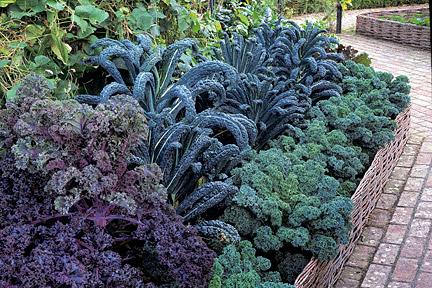 Crop rotation / RHS Gardening
