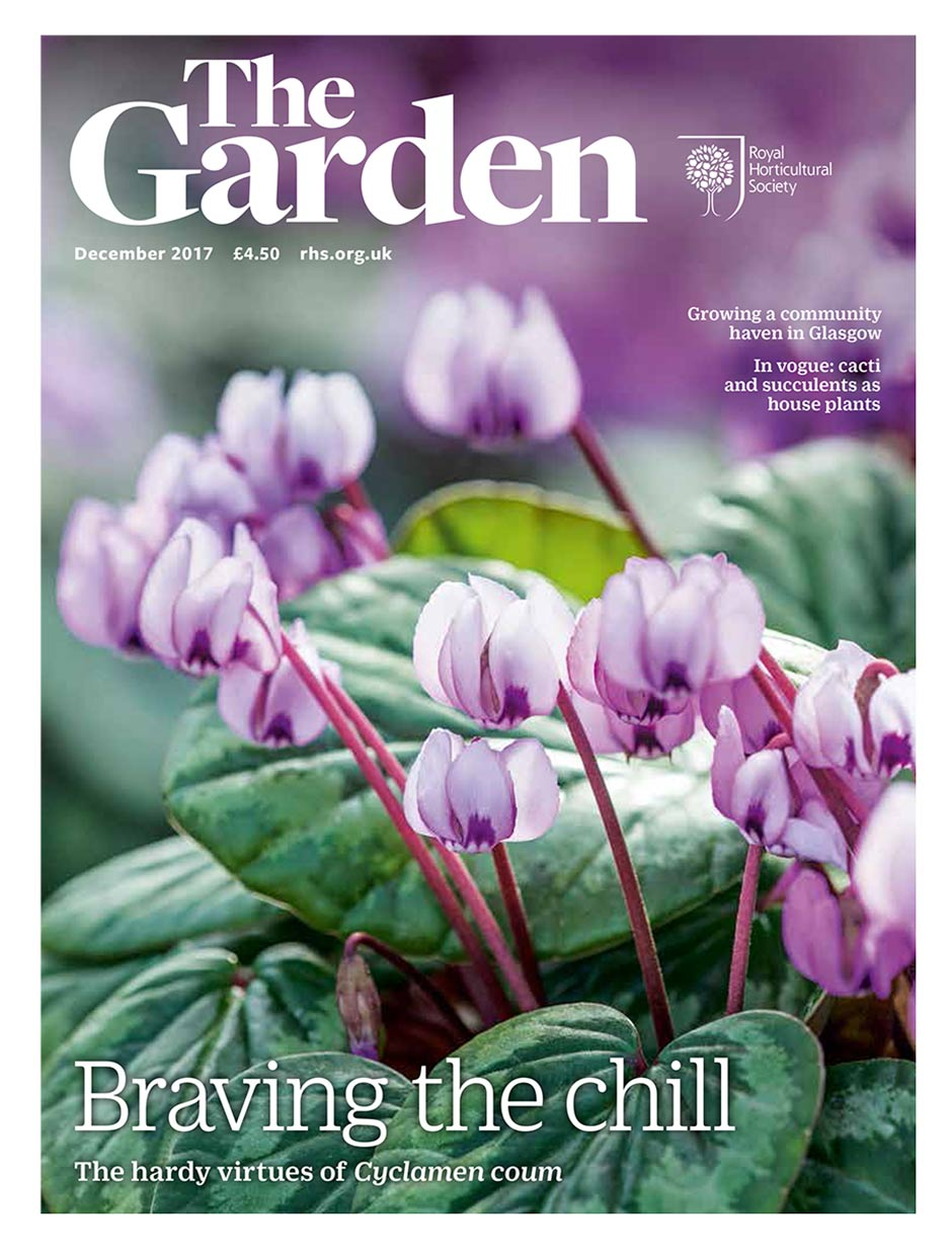 Jane Powers Explores The Colourful Borders Of Jimi Blakeu0027s Irish Garden  Which Features ...
