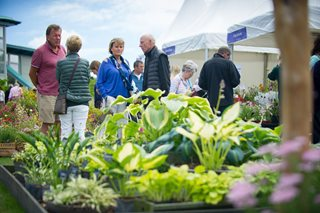 Hosta display at the Harlow Carr Flower Show