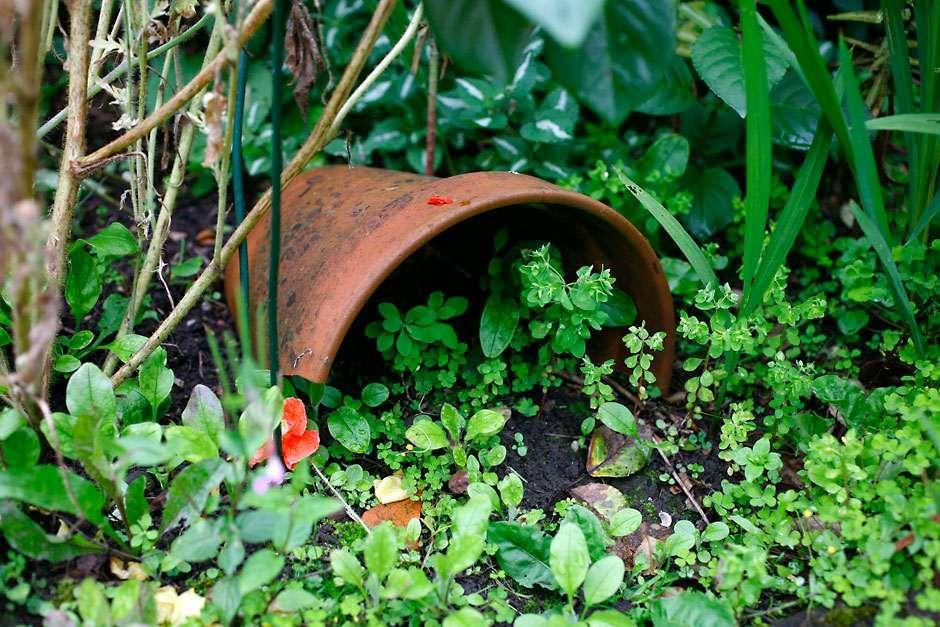 Ideas on attracting bats to your garden / RHS Gardening