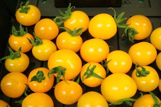 See the RHS top 10 cherry tomatoes with AGM status for your