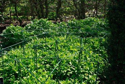 RHS Garden Rosemoor blog: We need your support! / RHS Gardening