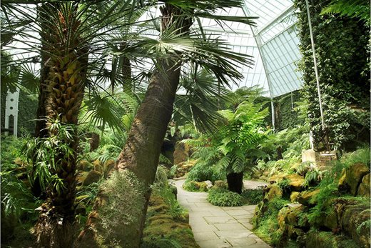 The fernery, Tatton Park