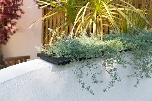 Design ideas for small gardens at the rhs hampton court for Small garden trees rhs