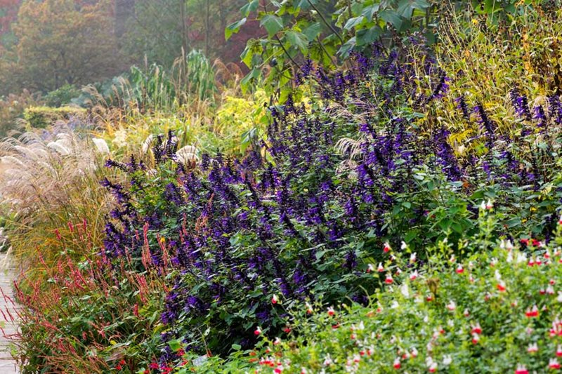 Rhs gardening top 10 late flowering perennials rhs gardening mixed border at wisley in autumn mightylinksfo