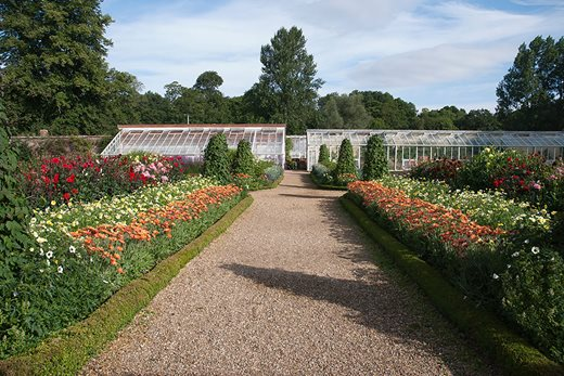 Rows of cut flowers at Forde Abbey Gardens