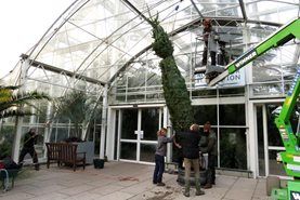 We made full use of the arboriculturist and their specialist equipment