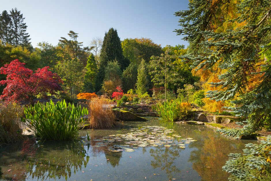 Autumn colour in the Sandstone Rock Garden at Harlow Carr
