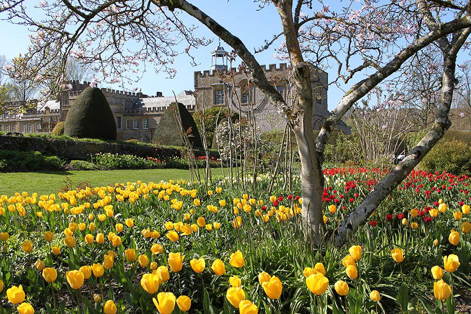 Tulips at Forde Abbey