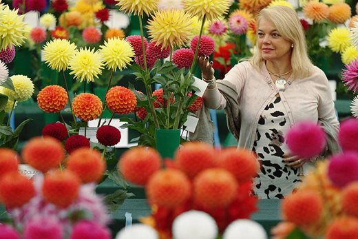 Woman with dahlias at the Wisley Flower Show