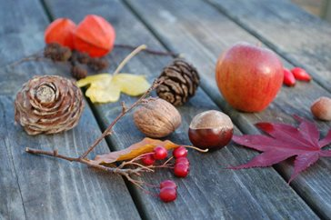Image result for autumn treasures