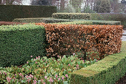 A selection of hedges. Credit: RHS/John Trenholm.