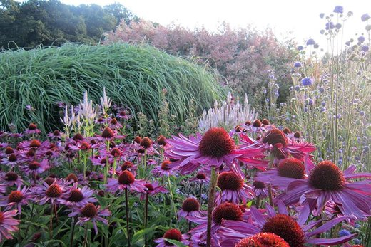 Naturalistic plantings at Sussex Prairie Garden