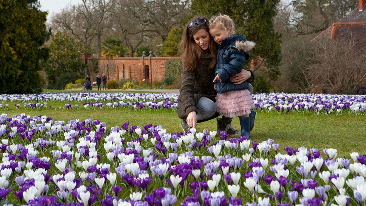 Mother and daughter looking at crocuses