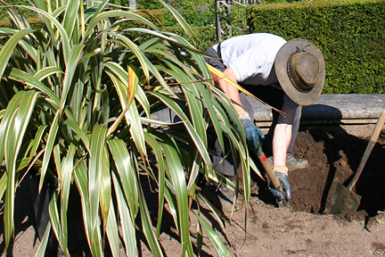 Moving a large Phormium. Image: Stephen Record/RHS