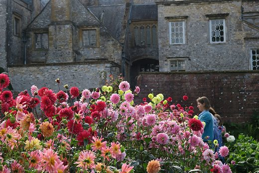 Visitors admire dahlias at Forde Abbey Gardens