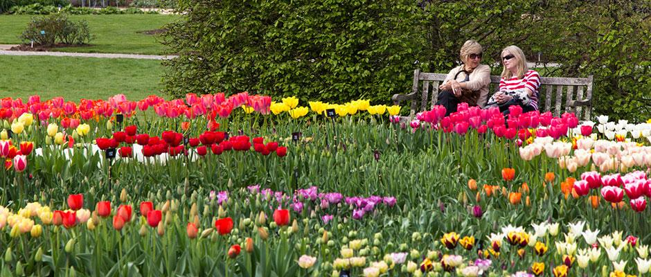 Visitors enjoying tulip displays