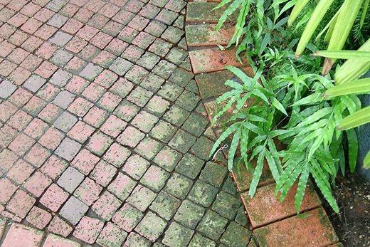 algae on brick path