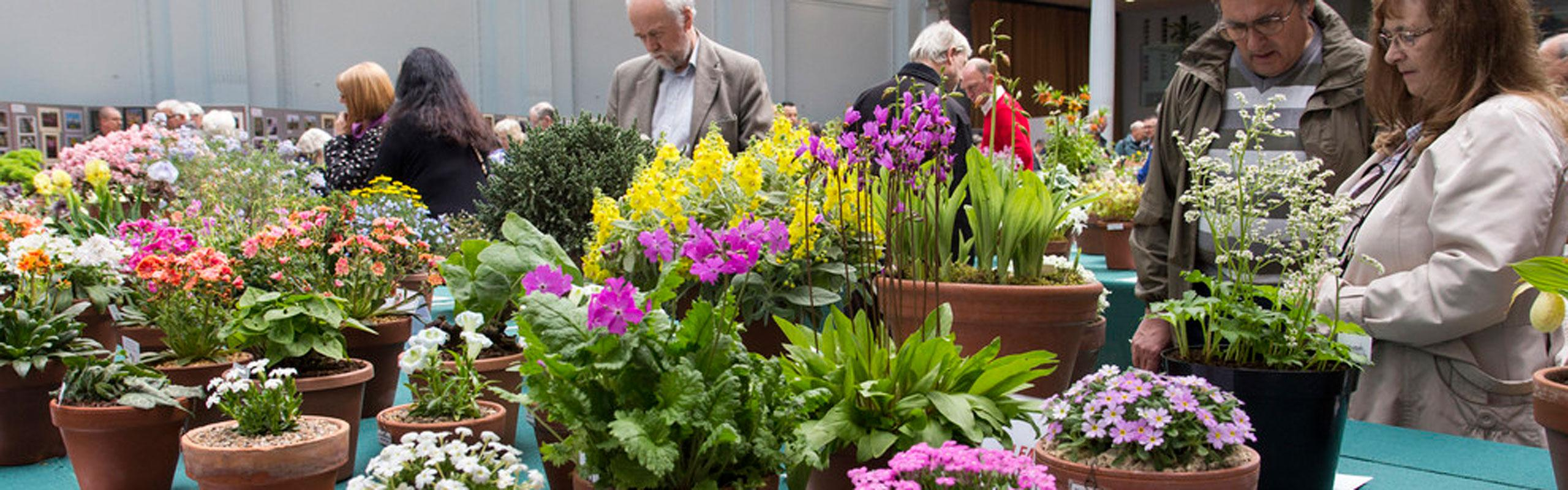 RHS London Alpine Show