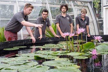 Rhs apprenticeships rhs gardening for Gardening qualifications