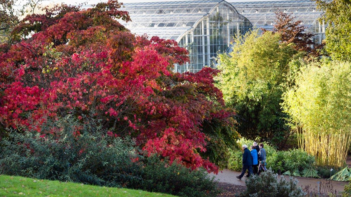 Visitors walking at Wisley in autumn