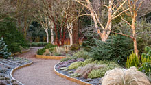 Visit Rosemoor in winter