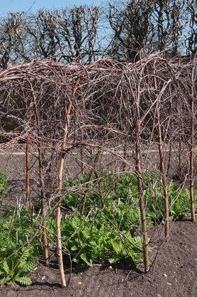 RHS Garden Wisley blog: Installing a support network / RHS