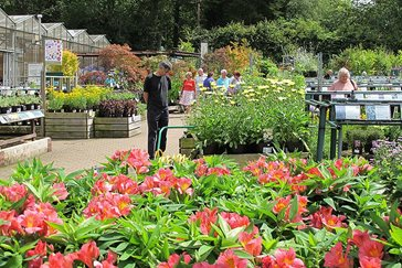 Gentleman in wisley plant centre