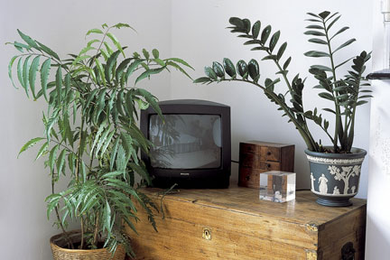 Houseplants including Zamioculcas zamiifolia  in a living room