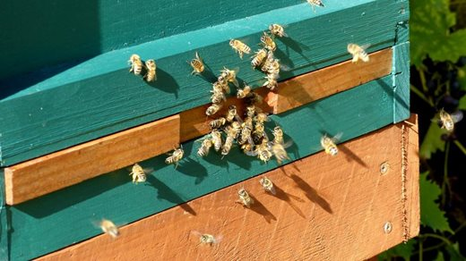 The bees before they settled in for winter