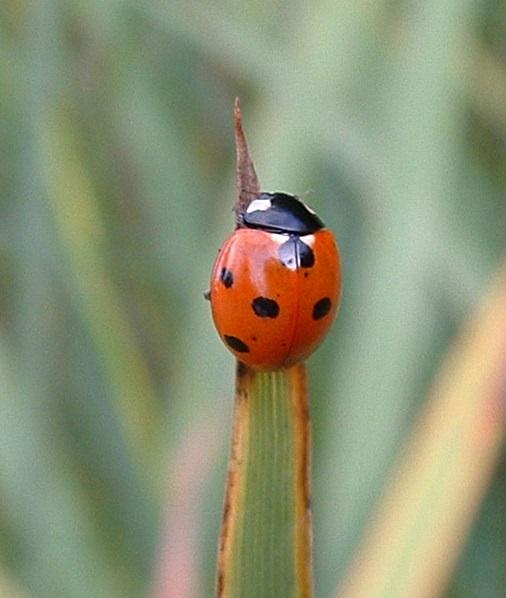 Read the latest RHS wildlife gardening blog / RHS Gardening