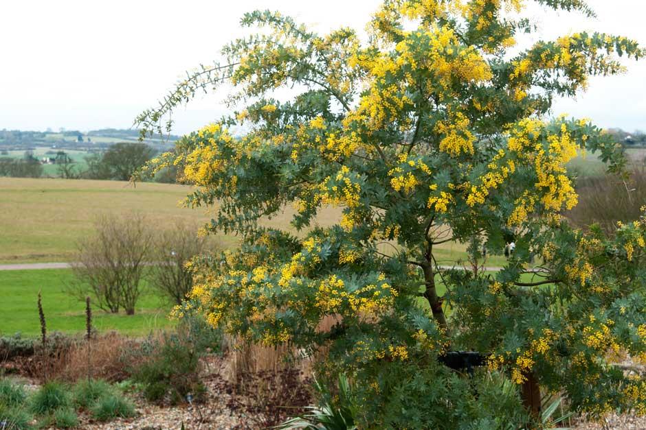 10 Flowering Trees For Small Gardens Rhs Gardening