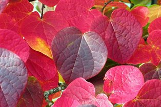 Which autumn plants do the RHS Curators cherish most?