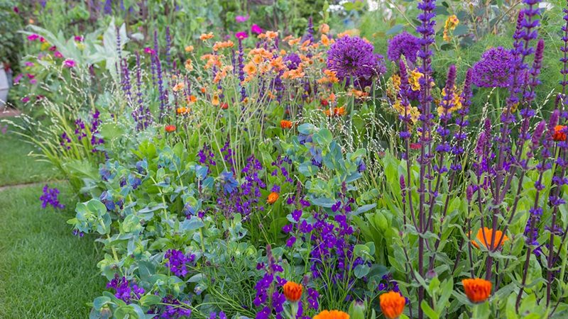 Colourful flowers in a garden to improve health and wellbeing