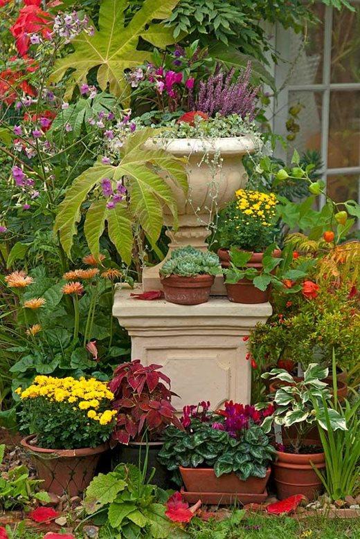 autumn bedding plants rhs gardening. Black Bedroom Furniture Sets. Home Design Ideas